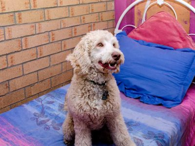 Accommodation for Dogs