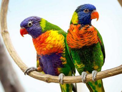 birds-header